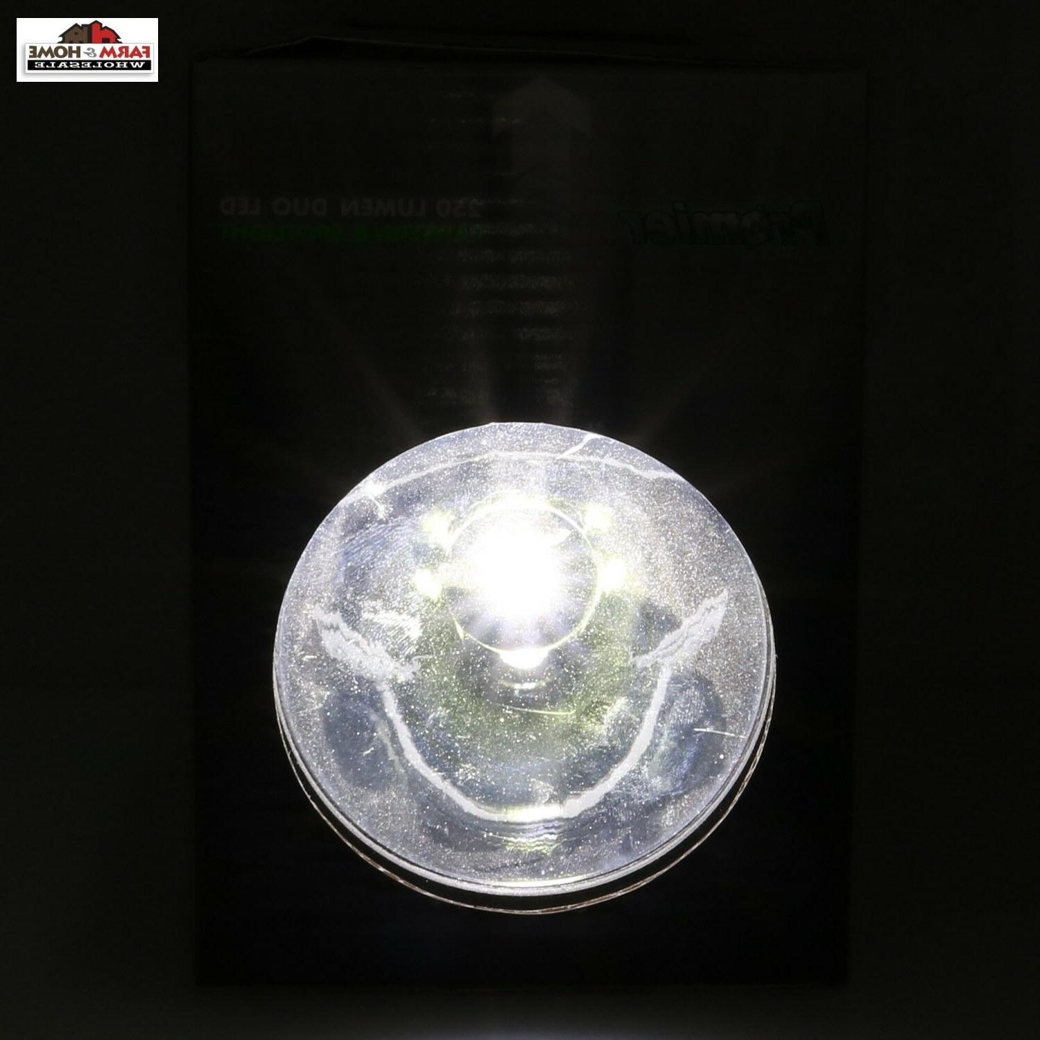 250 Lumens LED Lantern New